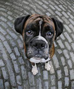 Собачий фотограф Судя по некоторым его работам, ему приходится сталкиваться с самыми непоседливыми, дурно воспитанными и невыносимыми собаками Туманного Альбиона. Собачий фотограф, Пол Уокер