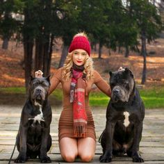 From ' Cane Corso Fans '