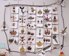 Apologia Botany - Creative Nature Display: forget turning the leaves into people or animals, this design would be a lovely way to display a collection from a nature walk.  I like the stick frame and the cards hanging down.  Would be creative as a fall leaf collection or a pressed flower arrangement.  Project appropriate for Apologia Botany.