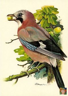 ru / Photo # 6 - Birds from Bramer - lifeisbeautiful Vogel Illustration, Botanical Illustration, Bird Drawings, Animal Drawings, Arte Naturalista, Motifs Animal, Bird Artwork, Bird Pictures, Watercolor Bird