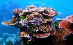 """Its another fascinating but distressing example of our changing climate. A new study in """"Nature"""" describes a brand new kind of ocean zone, dubbed the """"rariphotic"""" -- the direct result of warming oceans."""