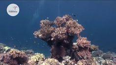 Pesona Indonesia - Taman Nasional Wakatobi, Sulawesi Tenggara