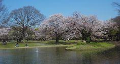 Tokyo Travel: Yoyogi Koen (Yoyogi Park) -park where the freaks and geeks gather