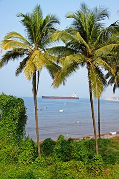 River Princess between the palms, #Goa