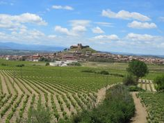 Sunny and clear day in Rioja