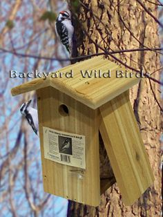 downy woodpecker birdhouse - Google Search Downy Woodpecker, Diy Things, Birdhouse, Google Search, Pets, Outdoor Decor, People, Home Decor, Birdhouse Ideas