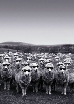 welsh sheep waiting for the sun to come out .... enjoy the wait www.sugarloafbarn.com
