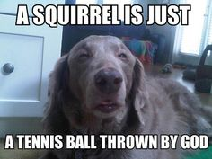 A squirrel is just a tennis ball thrown by God.