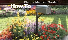 How To Plant a Mailbox Garden – Video