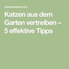 Katzen aus dem Garten vertreiben – 5 effektive Tipps