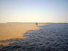 Meeting of the Waters - Negro River and Solimões River