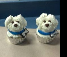 Bichon Frise Cup cakes. Cute as.
