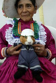 I feel bad for that guinea pig but at the same time I can't help laughing at the fact that there is a guinea pig festival in peru.