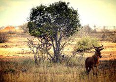 Parco nazionale dello Tsavo - Kenya (2014)