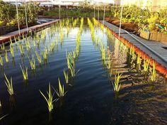 Phân bón Mỹ được nhập khẩu từ Mỹ: 5 mô hình trang trại trồng rau trên sân thượng ưu việt nhất thế giới