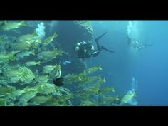 Diving - Habili Ali Riff [Red Sea] - Ägypten | schwimmen-tauchen-tirol.at #Ägypten #Egypt #Diving Diving Videos, Ali, Youtube, Diving, Swim, Ant, Youtubers, Wings, Youtube Movies