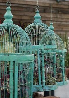 Bird cages - Jaulas