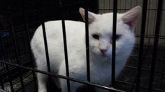 ADOPTED!! Casper is a sweet boy!!