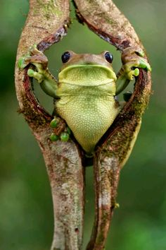 Frog. Just chilling...