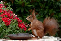 Caring For Your Plant Before Starting Your Own Garden Animal Photography, Amazing Photography, Photography Tips, Landscape Photography, Digital Photography, Better Photography, Scenic Photography, Wildlife Photography, Photography Awards