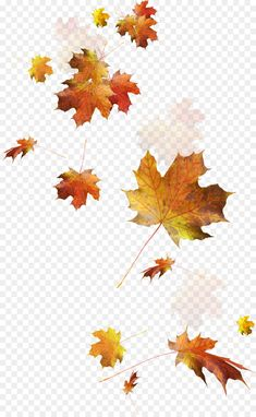 Falling Autumn Leaves Png Image - Transparent Autumn Leaves Png Clipart is best quality and high resolution which can be used personally or non-commercially. Best Photo Background, Studio Background Images, Background Images Wallpapers, Background Patterns, Phone Backgrounds, Fall Leaves Png, Falling Leaves, Autumn Leaves Tattoo, Autum Leaves