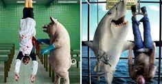 """""""O Grito do Bicho"""": 25 imagens chocantes que colocam os humanos no lug..."""