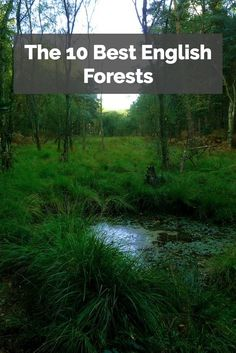 England's forests are a wonderful place to go for a walk and explore. There's so much to see and do!