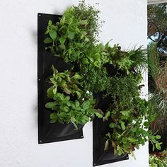 Herbs can be grown anywhere you like but a having a herb garden design makes it more appealing. A nice herb garden design can be considered a luxury for the senses. Vertical Herb Gardens, Vertical Garden Planters, Small Gardens, Herb Garden Design, Diy Garden, Hanging Plants, Indoor Plants, Growing Herbs At Home, Growing Vegetables