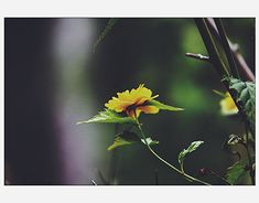 """Check out new work on my @Behance portfolio: """"Flowers vol 1"""" http://be.net/gallery/66974733/Flowers-vol-1"""
