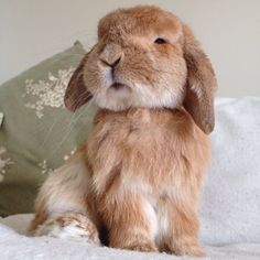 a very regal Rambo, sweetest bunny.
