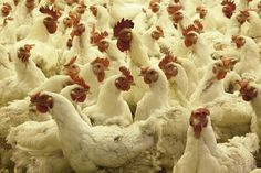 Tell Congress: Stop the Tyson Foods Anti-Farmer Act!