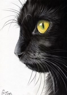 Kitty black green eyes picture