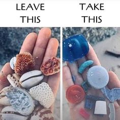 If everyone took out as much plastics as they did shells out beaches would be so much prettier. Taking these shells damage the environment by taking away helpful nesting places for small ocean critters! Leave them there and take the trash! Save Planet Earth, Save Our Earth, Our Planet, Save The Planet, Save Mother Earth, Mother Nature, Amazing Animals, Save Our Oceans, Clean Beach