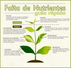 Falta de nutrientes en las plantas: Chuleta #carencia #plantas #chuleta