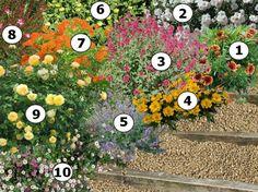 1000 id es sur le th me gaura sur pinterest fleur vivace vivace et plantes vivaces. Black Bedroom Furniture Sets. Home Design Ideas