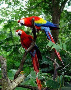 Lugares y animales de Costa Rica,