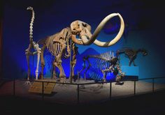 Plan A Visit | Milwaukee Public Museum - I love the Milwaukee Public Museum! Plan to spend a day and watch an IMAX movie too.
