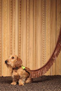 Correa para perro modelo Flecos