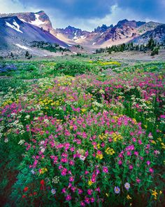 Wildflowers in the central Oregon's Three Sisters Wilderness area with Broken Top Mountain in the background - Mike Putnam Photography Oregon Mountains, Cascade Mountains, Flower Landscape, Wild Nature, Road Trip Usa, Landscape Photographers, Beautiful World, Beautiful Places, Beautiful Landscapes