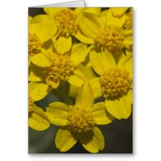 Yellow Wildflowers Cards from Florals by Fred #zazzle #gift