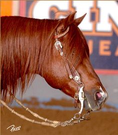 TopSails Rein Maker  Todd Crawford Performance Horses