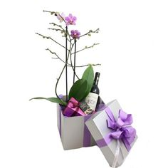 Lovely gift box containing; Orchid Plant 75cl bottle of red or white French wine 190gm box of Belgian chocolates - £40.00