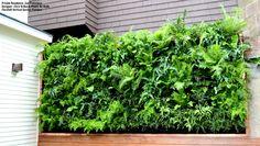 Fern Garden for a San Francisco Home - Florafelt Vertical Garden Planters and Living Wall Systems