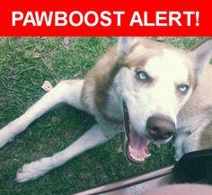 Please spread the word! Nikko was last seen in Gulfport, FL 33707.    Nearest Address: Near 52nd St S & 22nd S