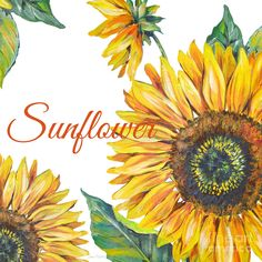 Sunflower-jp2592 Painting
