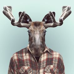 ZOO PORTRAITS by Yago Partal