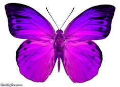 butterfly pictures | Pink Butterfly - pictures