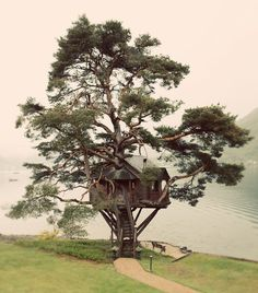 Tree House Lodge, Scotland