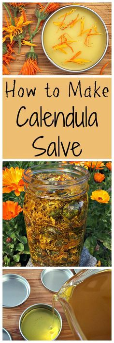 Natural Remedies How to make a healing calendula salve. It's easier than you might think! - How to make a healing calendula salve, great for all kinds of skin issues. I wrote this post for the Herbal Academy and I wanted to share it with you! Healing Herbs, Medicinal Herbs, Natural Healing, Holistic Healing, Wound Healing, Natural Health Remedies, Herbal Remedies, Cold Remedies, Natural Medicine