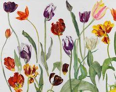 elizabeth blackadder | Tulips, 2010 (w/c on paper), Blackadder, Dame Elizabeth (b.1931) (BACS ...